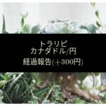 【FX】トラリピ 経過報告 運用開始3日経過